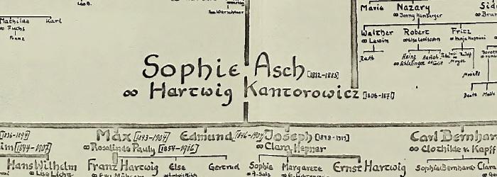 Kantorowicz - drzewo1