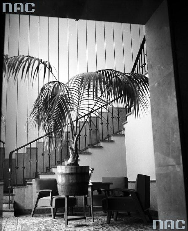Hol obok restauracji. Widoczna palma, fotele wmiejscu dowypoczynku orazklatka2W