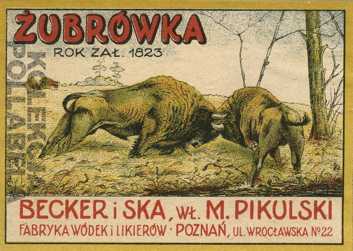 Żubrówka Pikulski